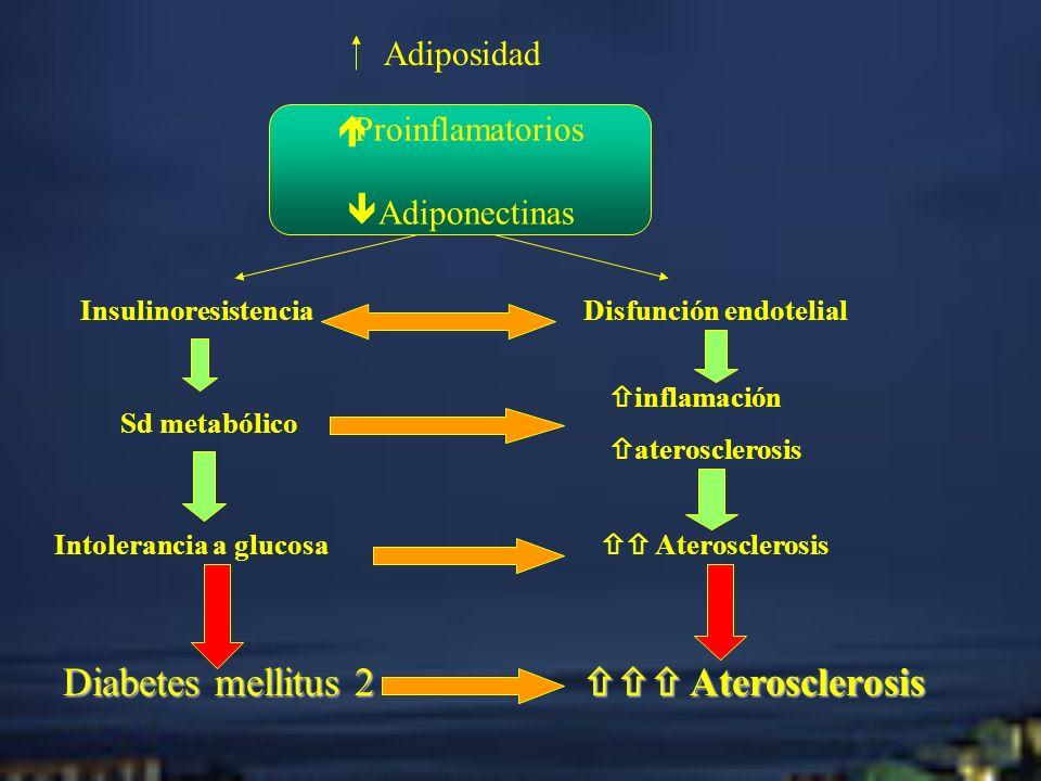 Adiposidad InsulinoresistenciaDisfunción endotelial Sd metabólico inflamación aterosclerosis Intolerancia a glucosa Aterosclerosis Diabetes mellitus 2