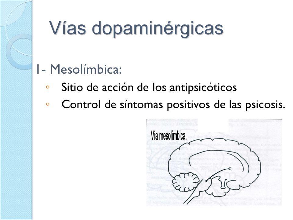 Vías dopaminérgicas 1- Mesolímbica: Sitio de acción de los antipsicóticos Control de síntomas positivos de las psicosis.