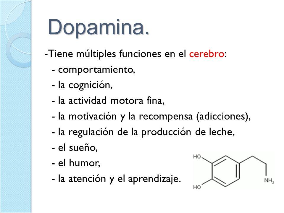 Dopamina. -Tiene múltiples funciones en el cerebro: - comportamiento, - la cognición, - la actividad motora fina, - la motivación y la recompensa (adi