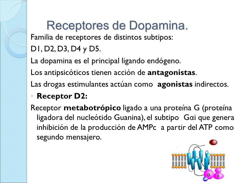 Receptores de Dopamina. Familia de receptores de distintos subtipos: D1, D2, D3, D4 y D5. La dopamina es el principal ligando endógeno. Los antipsicót
