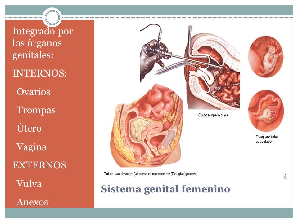 Sistema genital femenino Integrado por los órganos genitales: INTERNOS: Ovarios Trompas Útero Vagina EXTERNOS Vulva Anexos