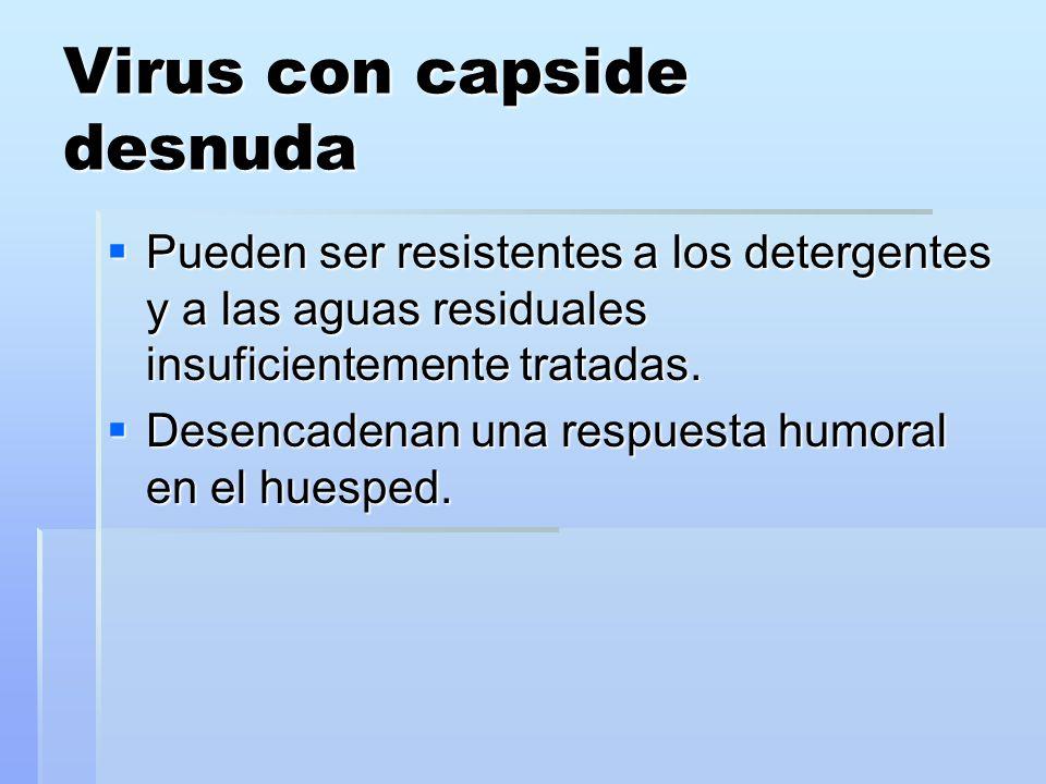 Virus con capside desnuda Pueden ser resistentes a los detergentes y a las aguas residuales insuficientemente tratadas. Pueden ser resistentes a los d