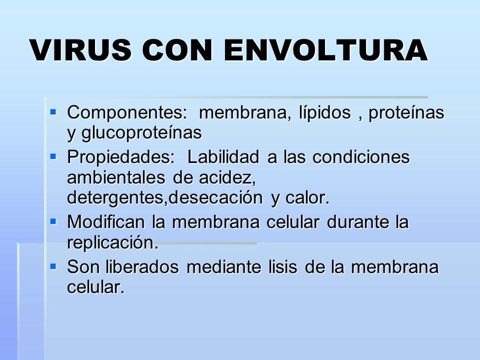 VIRUS CON ENVOLTURA Componentes: membrana, lípidos, proteínas y glucoproteínas Componentes: membrana, lípidos, proteínas y glucoproteínas Propiedades: