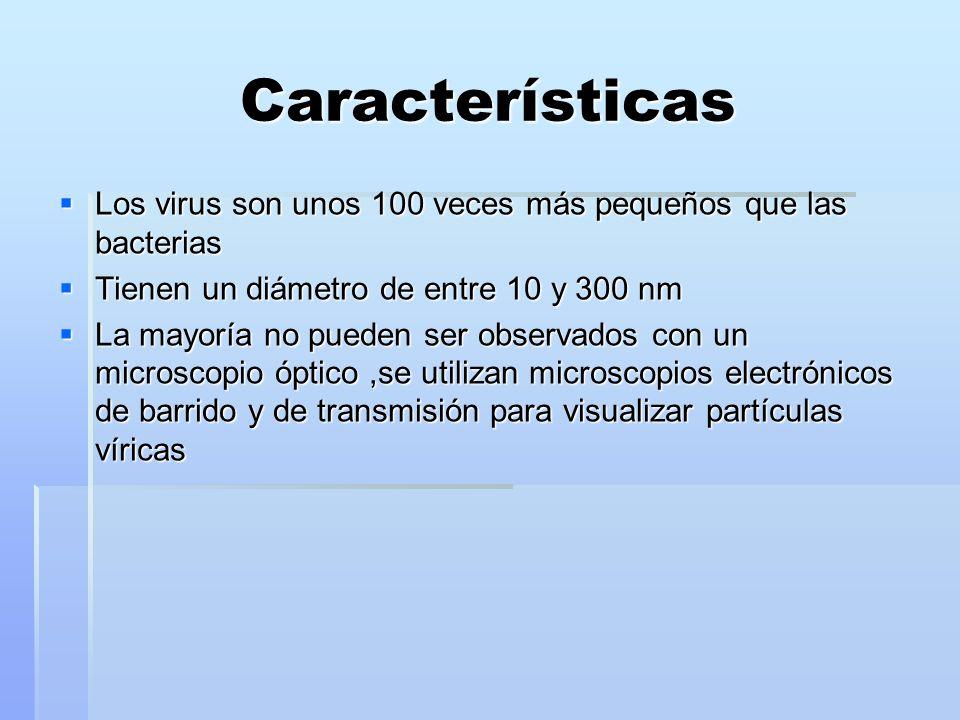 Características Los virus son unos 100 veces más pequeños que las bacterias Los virus son unos 100 veces más pequeños que las bacterias Tienen un diám