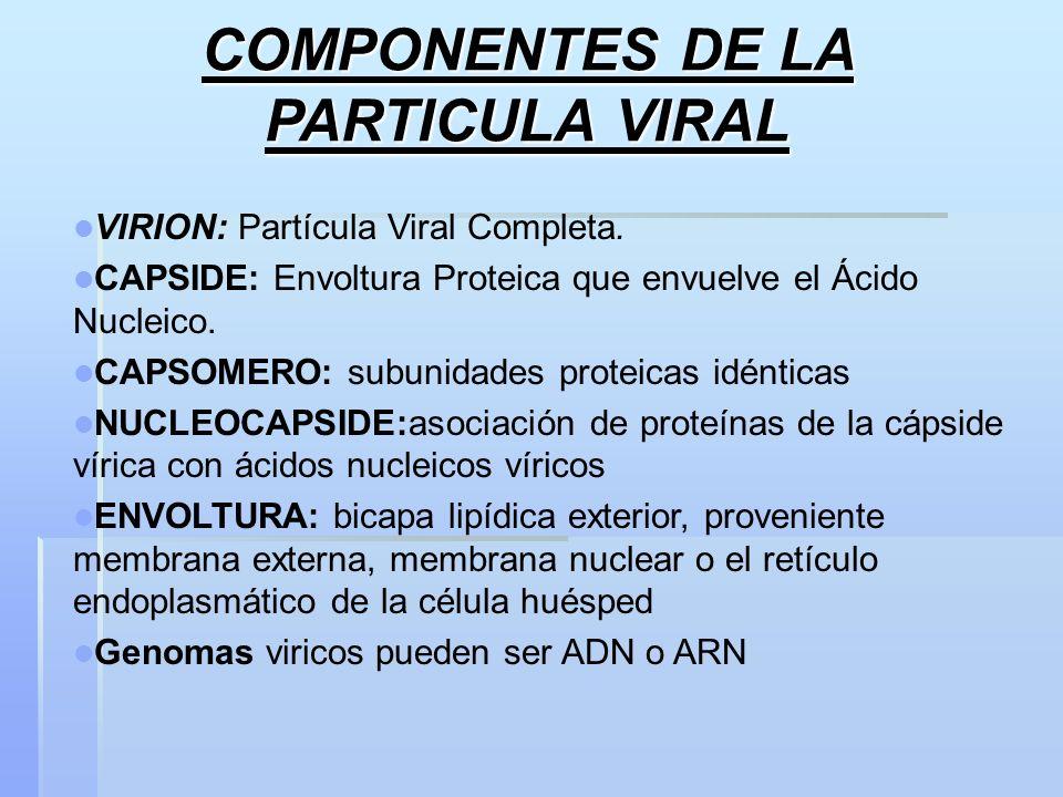COMPONENTES DE LA PARTICULA VIRAL VIRION: Partícula Viral Completa. CAPSIDE: Envoltura Proteica que envuelve el Ácido Nucleico. CAPSOMERO: subunidades