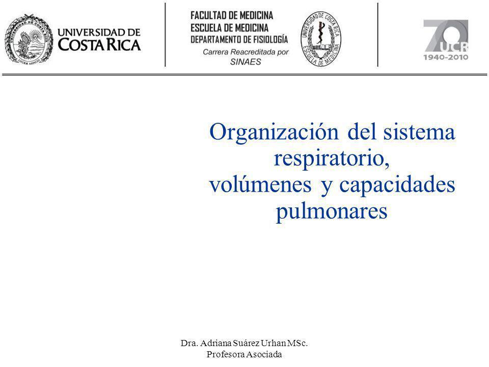 Organización del sistema respiratorio, volúmenes y capacidades pulmonares Dra. Adriana Suárez Urhan MSc. Profesora Asociada