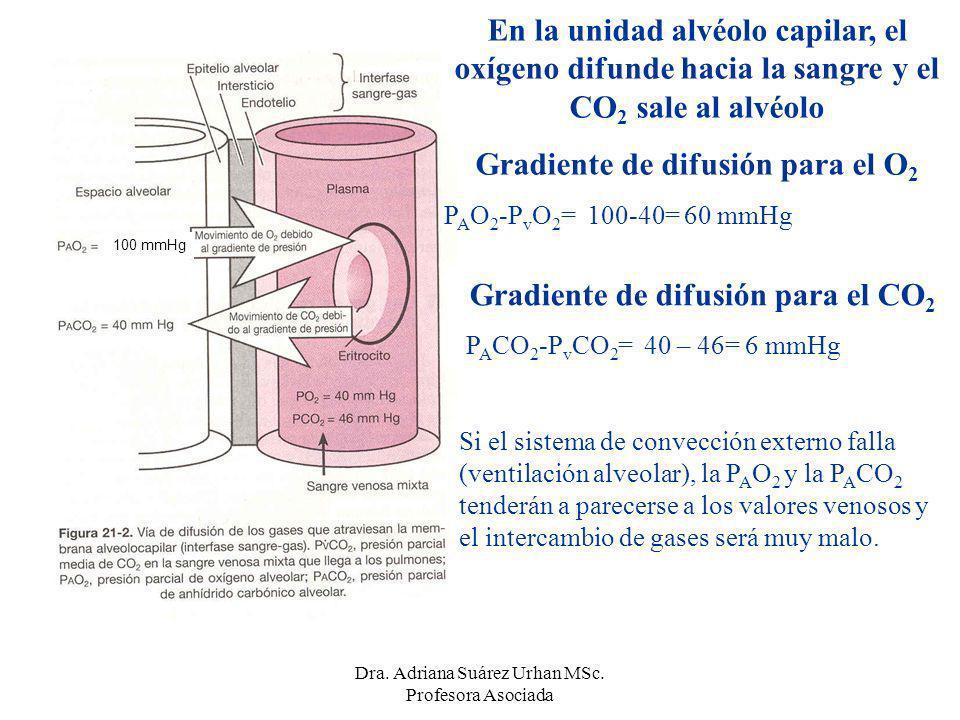Gradiente de difusión para el CO 2 P A CO 2 -P v CO 2 = 40 – 46= 6 mmHg Si el sistema de convección externo falla (ventilación alveolar), la P A O 2 y