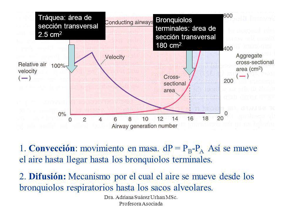 1. Convección: movimiento en masa. dP = P B -P A Así se mueve el aire hasta llegar hasta los bronquiolos terminales. 2. Difusión: Mecanismo por el cua