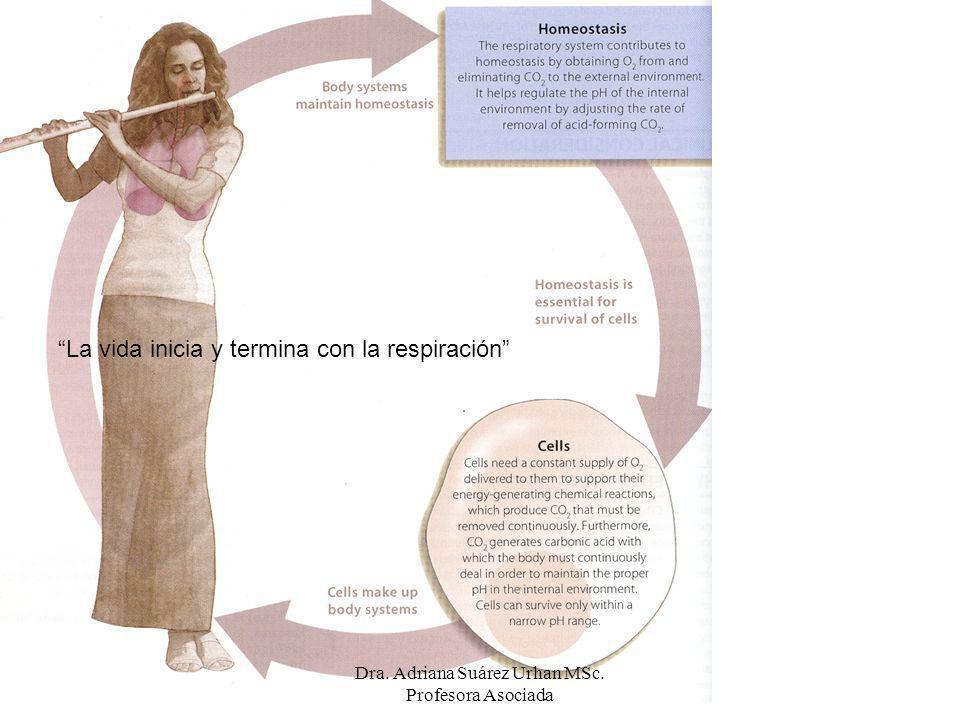 Respiración externa: 1.Transporte de O 2 de la atmósfera a la mitocondria.