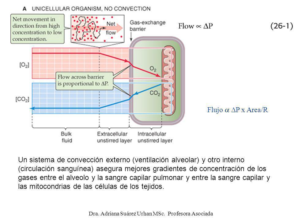 Flujo P x Area/R Un sistema de convección externo (ventilación alveolar) y otro interno (circulación sanguínea) asegura mejores gradientes de concentr