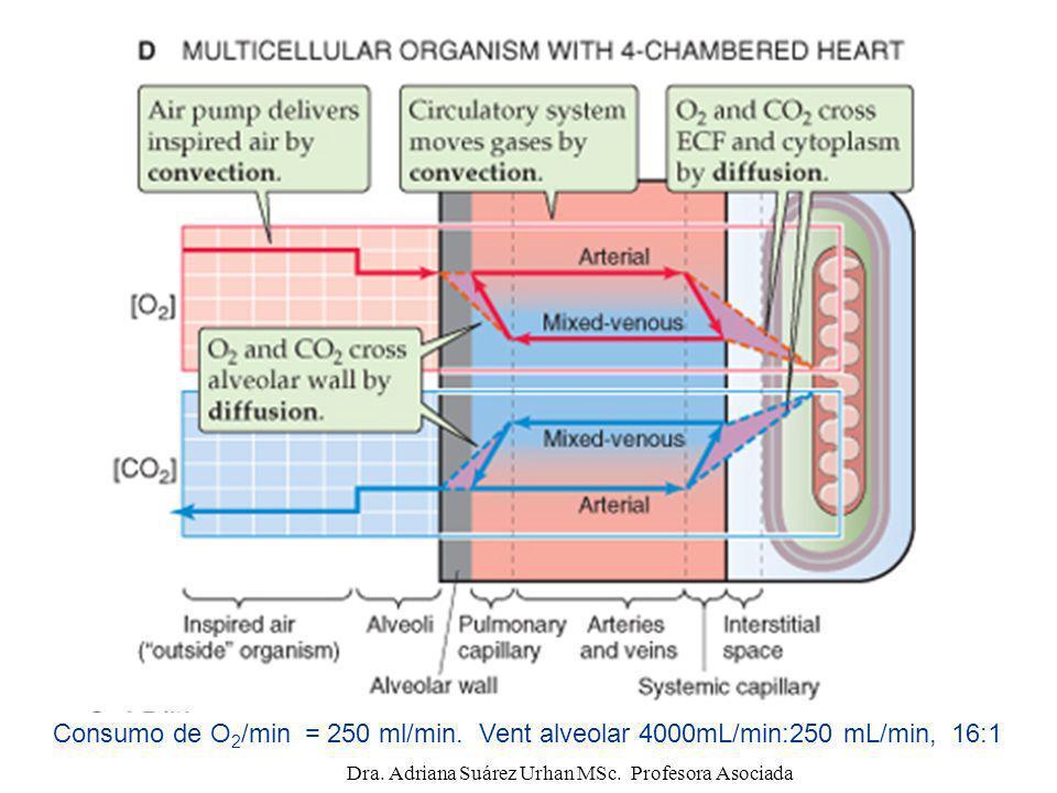 Membrana de intercambio respiratorio: Líquido alveolar Células alveolares (neumocitos tipo I y II) Membrana basal del epitelio alveolar Membrana basal del endotelio capilar Células endoteliales Dra.