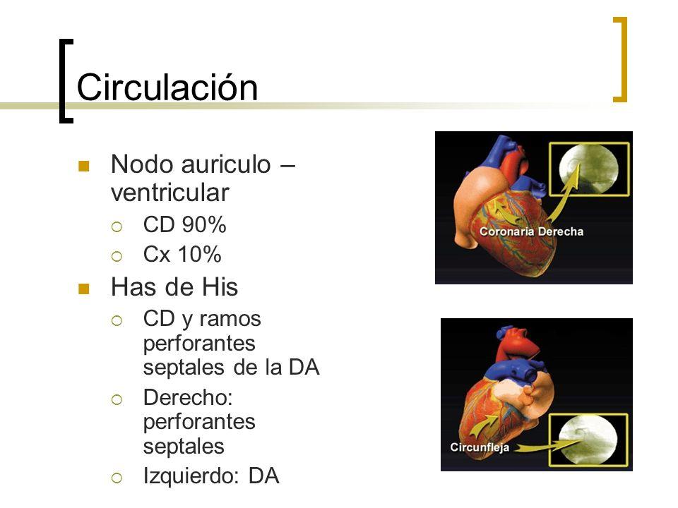 Circulación Nodo auriculo – ventricular CD 90% Cx 10% Has de His CD y ramos perforantes septales de la DA Derecho: perforantes septales Izquierdo: DA