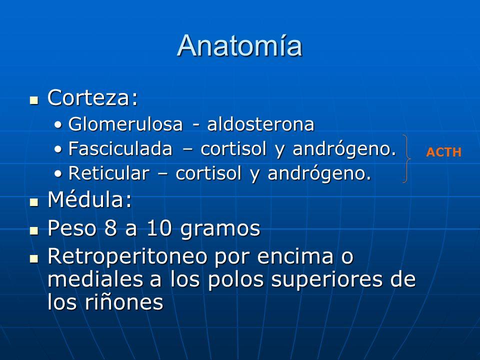 Anatomía Corteza: Corteza: Glomerulosa - aldosteronaGlomerulosa - aldosterona Fasciculada – cortisol y andrógeno.Fasciculada – cortisol y andrógeno. R