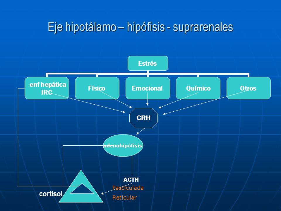 Eje hipotálamo – hipófisis - suprarenales Estrés enf hepática IRC FísicoEmocionalQuímicoOtros CRH ACTH adenohipófisis cortisol Fasciculada Reticular