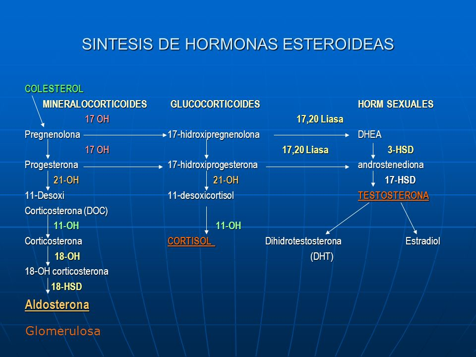 SINTESIS DE HORMONAS ESTEROIDEAS COLESTEROL MINERALOCORTICOIDES GLUCOCORTICOIDES HORM SEXUALES 17 OH 17,20 Liasa 17 OH 17,20 Liasa Pregnenolona17-hidroxipregnenolonaDHEA 17 OH 17,20 Liasa 3-HSD 17 OH 17,20 Liasa 3-HSD Progesterona17-hidroxiprogesteronaandrostenediona 21-OH 21-OH 17-HSD 21-OH 21-OH 17-HSD 11-Desoxi11-desoxicortisolTESTOSTERONA Corticosterona (DOC) 11-OH 11-OH 11-OH 11-OH Corticosterona CORTISOL DihidrotestosteronaEstradiol 18-OH (DHT) 18-OH (DHT) 18-OH corticosterona 18-HSD 18-HSDAldosterona