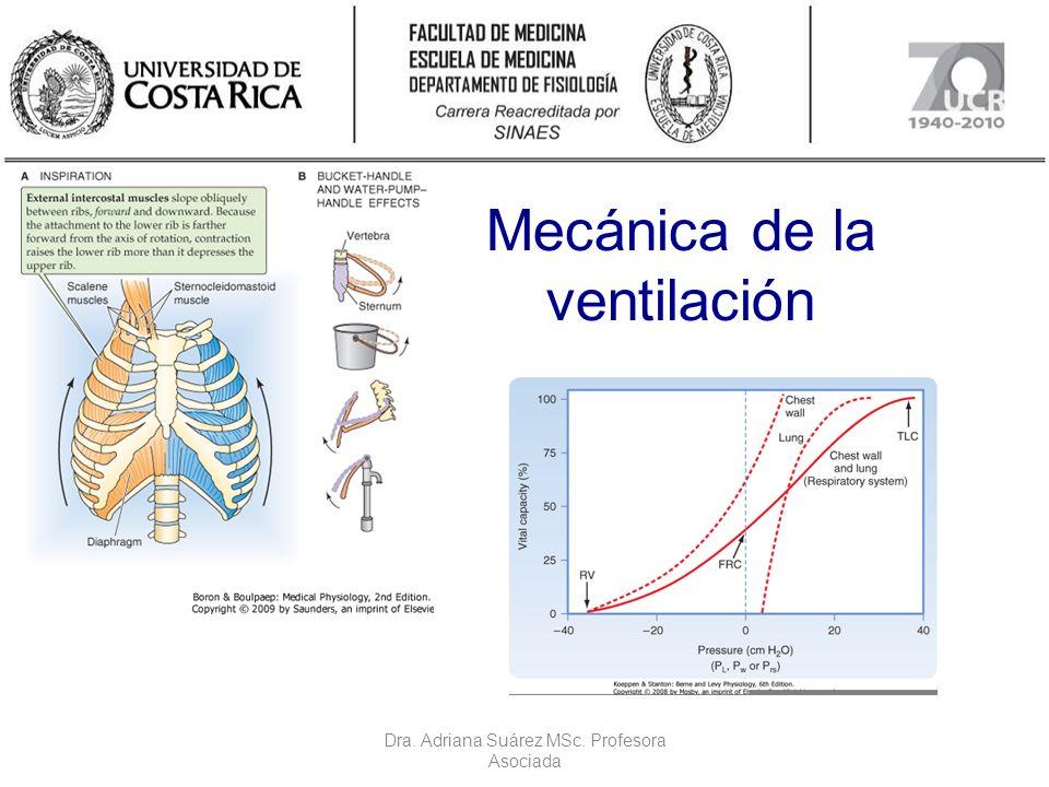 Mecánica de la ventilación Dra. Adriana Suárez MSc. Profesora Asociada