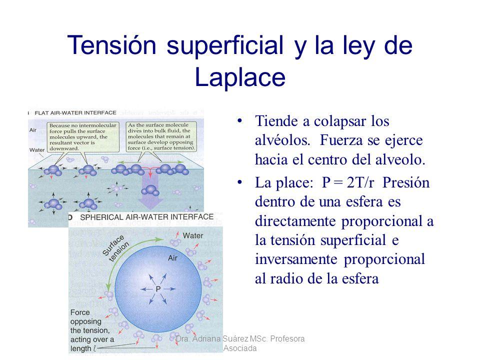 Tensión superficial y la ley de Laplace Tiende a colapsar los alvéolos. Fuerza se ejerce hacia el centro del alveolo. La place: P = 2T/r Presión dentr