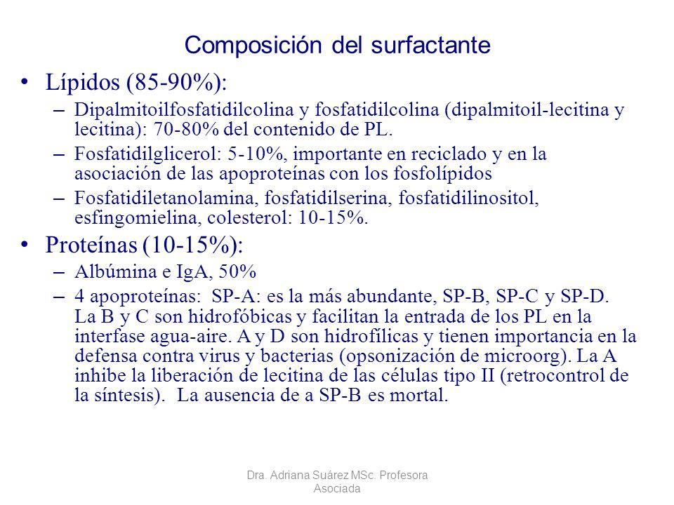 Composición del surfactante Lípidos (85-90%): – Dipalmitoilfosfatidilcolina y fosfatidilcolina (dipalmitoil-lecitina y lecitina): 70-80% del contenido