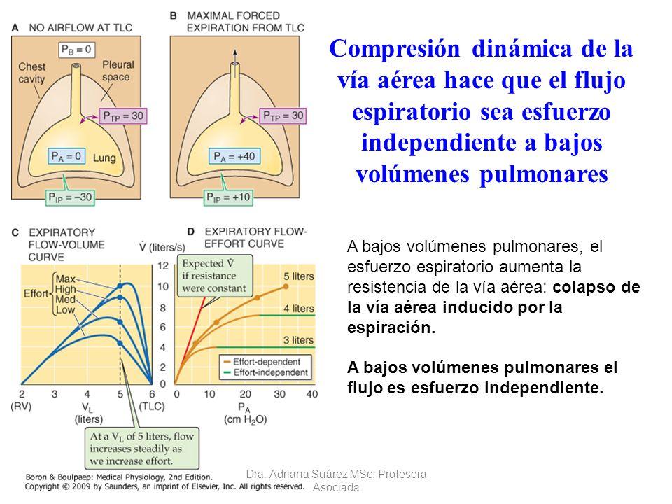 Compresión dinámica de la vía aérea hace que el flujo espiratorio sea esfuerzo independiente a bajos volúmenes pulmonares A bajos volúmenes pulmonares