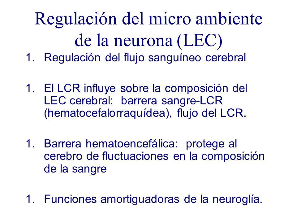 Regulación del micro ambiente de la neurona (LEC) 1.Regulación del flujo sanguíneo cerebral 1.El LCR influye sobre la composición del LEC cerebral: ba