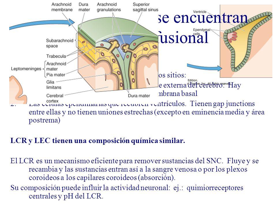 LCR y LEC cerebral se encuentran en equilibrio difusional LCR y tejido cerebral se ponen en contacto en dos sitios: 1.Membrana pial glial que recubre