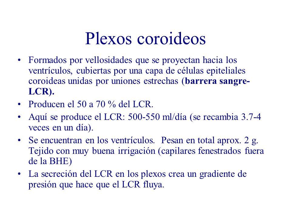 Plexos coroideos Formados por vellosidades que se proyectan hacia los ventrículos, cubiertas por una capa de células epiteliales coroideas unidas por