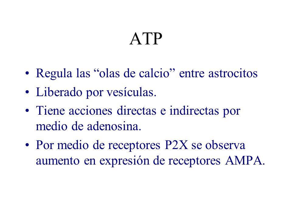 ATP Regula las olas de calcio entre astrocitos Liberado por vesículas. Tiene acciones directas e indirectas por medio de adenosina. Por medio de recep