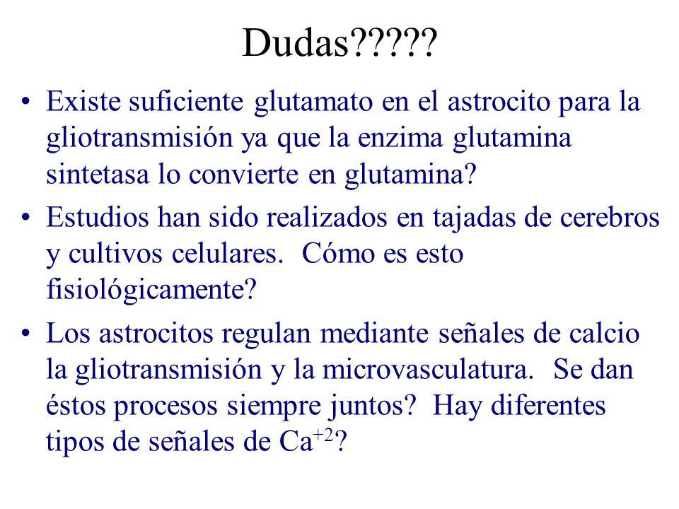Dudas????? Existe suficiente glutamato en el astrocito para la gliotransmisión ya que la enzima glutamina sintetasa lo convierte en glutamina? Estudio