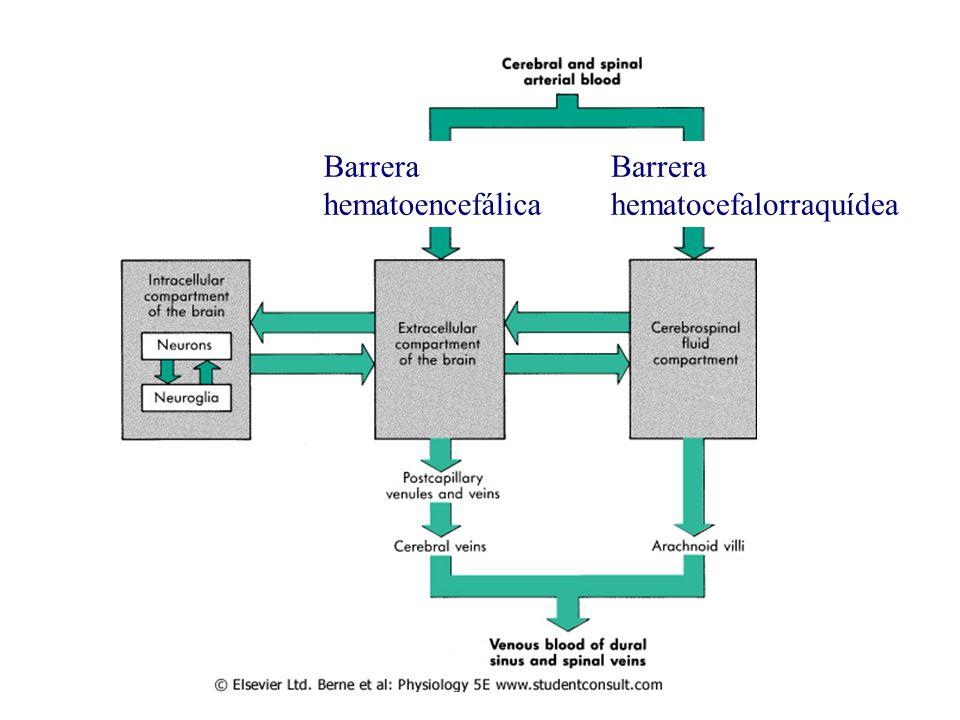 Barrera hematocefalorraquídea Barrera hematoencefálica