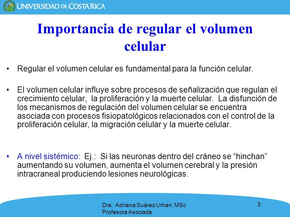 34 Reducción reguladora del volumen celular (RRV): son las respuestas celulares que se desencadenan al colocar una célula en un medio hipotónico que produce un aumento del volumen celular.