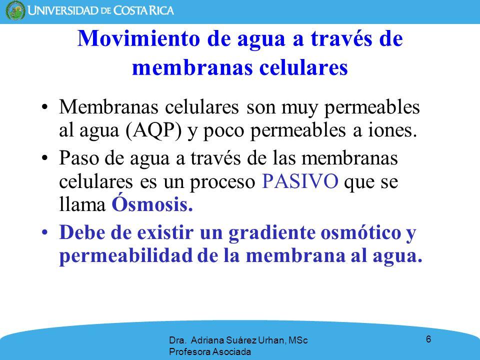 6 Movimiento de agua a través de membranas celulares Membranas celulares son muy permeables al agua (AQP) y poco permeables a iones. Paso de agua a tr