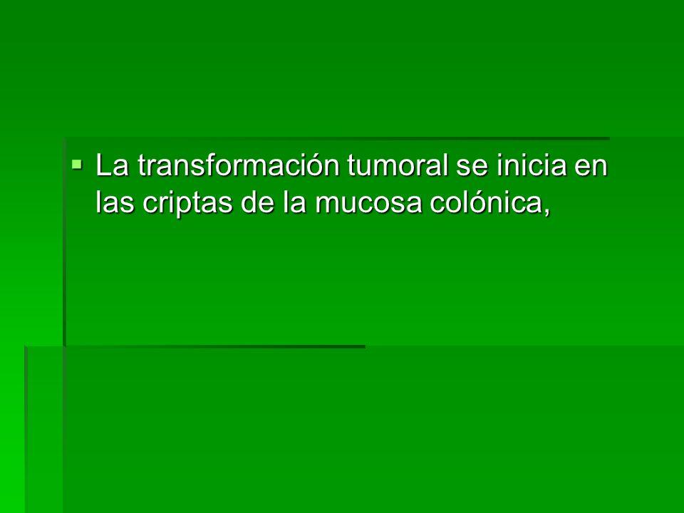 La transformación tumoral se inicia en las criptas de la mucosa colónica, La transformación tumoral se inicia en las criptas de la mucosa colónica,