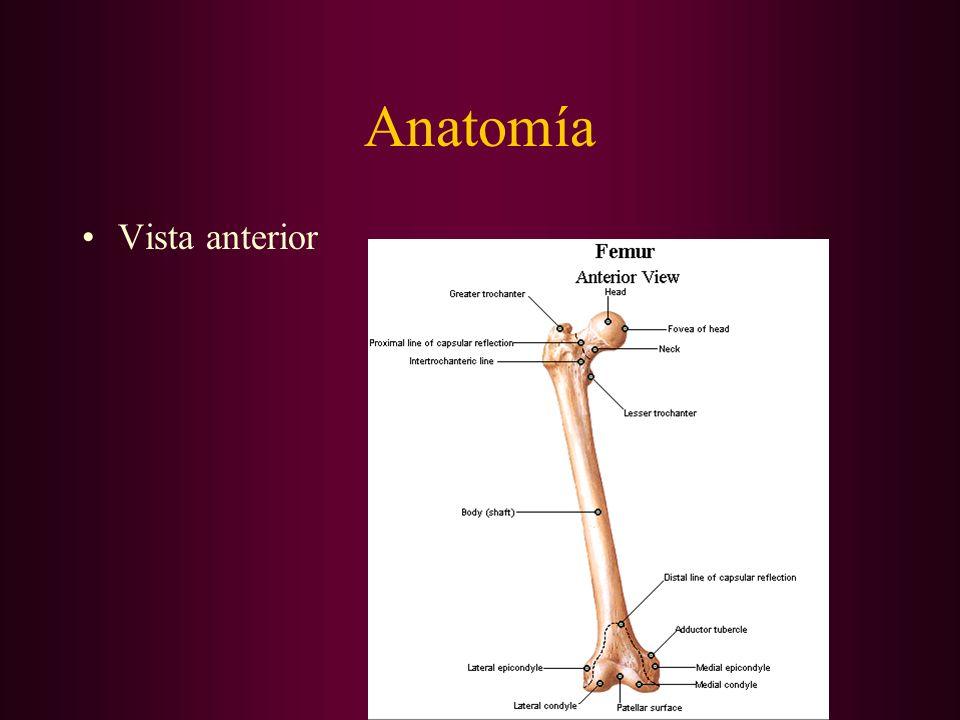 Fracturas De Fémur Son más frecuentes en el paciente jóven que en el anciano.