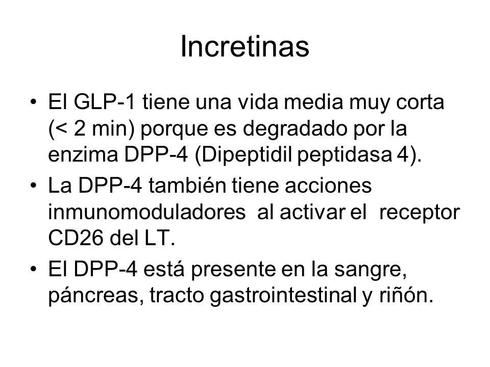 Incretinas El GLP-1 tiene una vida media muy corta (< 2 min) porque es degradado por la enzima DPP-4 (Dipeptidil peptidasa 4). La DPP-4 también tiene