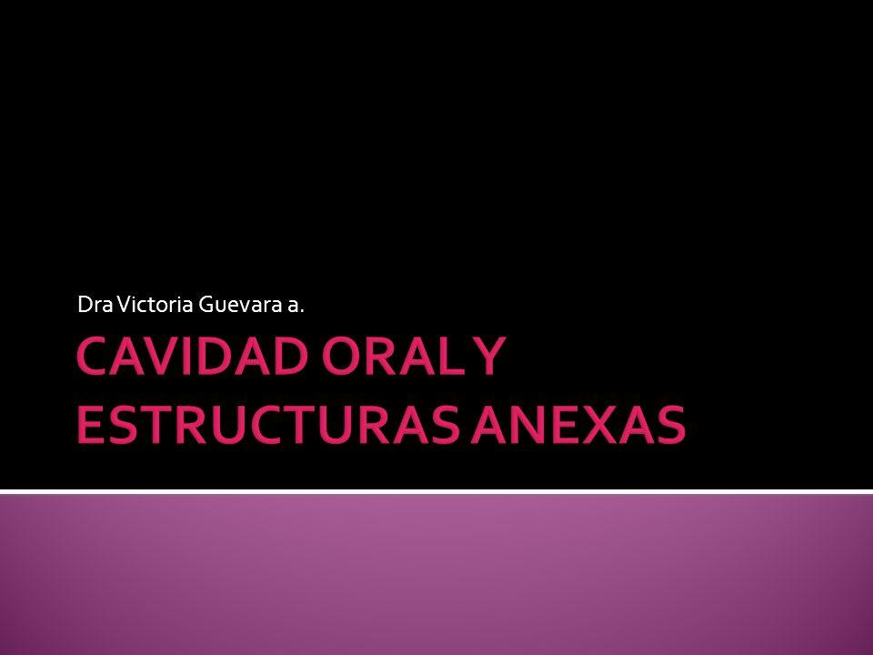 Órganos intraparotídeos A.carótida externa: recorre un corto trayecto dentro de la glándula.