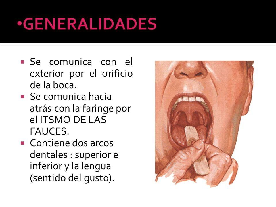 Se comunica con el exterior por el orificio de la boca. Se comunica hacia atrás con la faringe por el ITSMO DE LAS FAUCES. Contiene dos arcos dentales