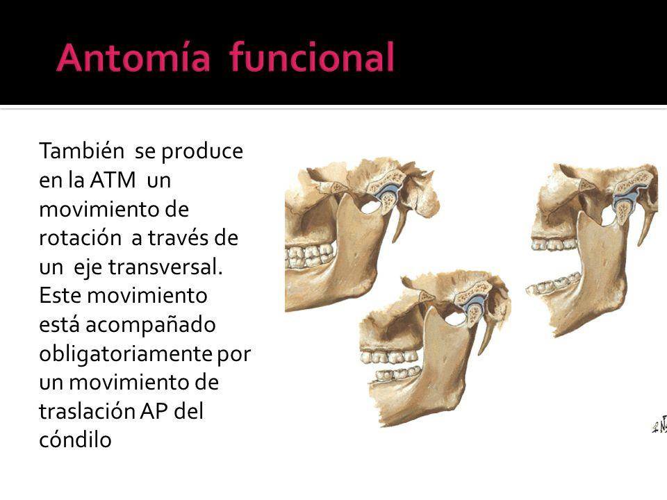 También se produce en la ATM un movimiento de rotación a través de un eje transversal. Este movimiento está acompañado obligatoriamente por un movimie