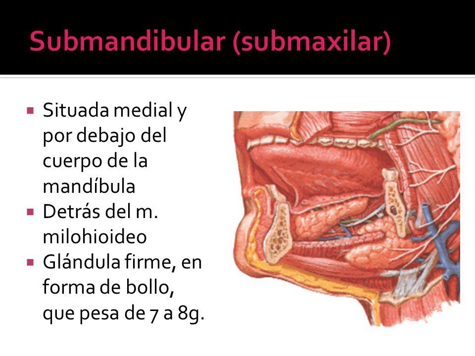 Situada medial y por debajo del cuerpo de la mandíbula Detrás del m. milohioideo Glándula firme, en forma de bollo, que pesa de 7 a 8g.