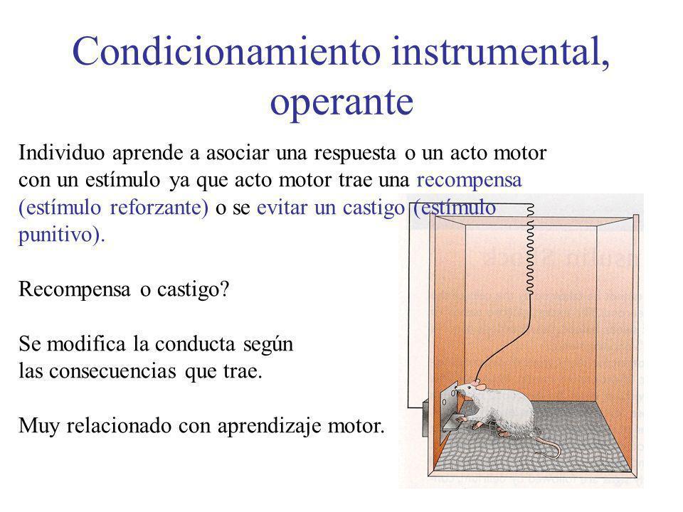 Condicionamiento instrumental, operante Individuo aprende a asociar una respuesta o un acto motor con un estímulo ya que acto motor trae una recompens