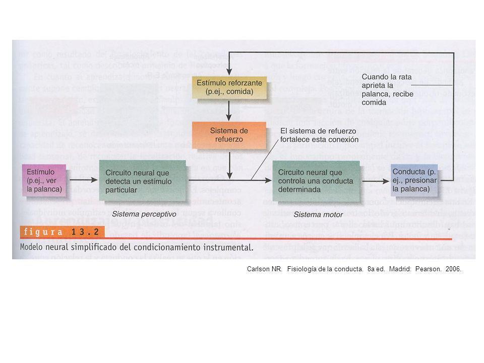 Carlson NR. Fisiología de la conducta. 8a ed. Madrid: Pearson. 2006.