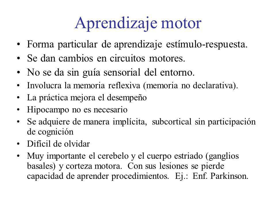 Aprendizaje motor Forma particular de aprendizaje estímulo-respuesta. Se dan cambios en circuitos motores. No se da sin guía sensorial del entorno. In