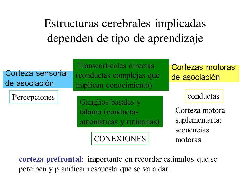 Corteza sensorial de asociación Cortezas motoras de asociación Transcorticales directas (conductas complejas que implican conocimiento) Ganglios basal