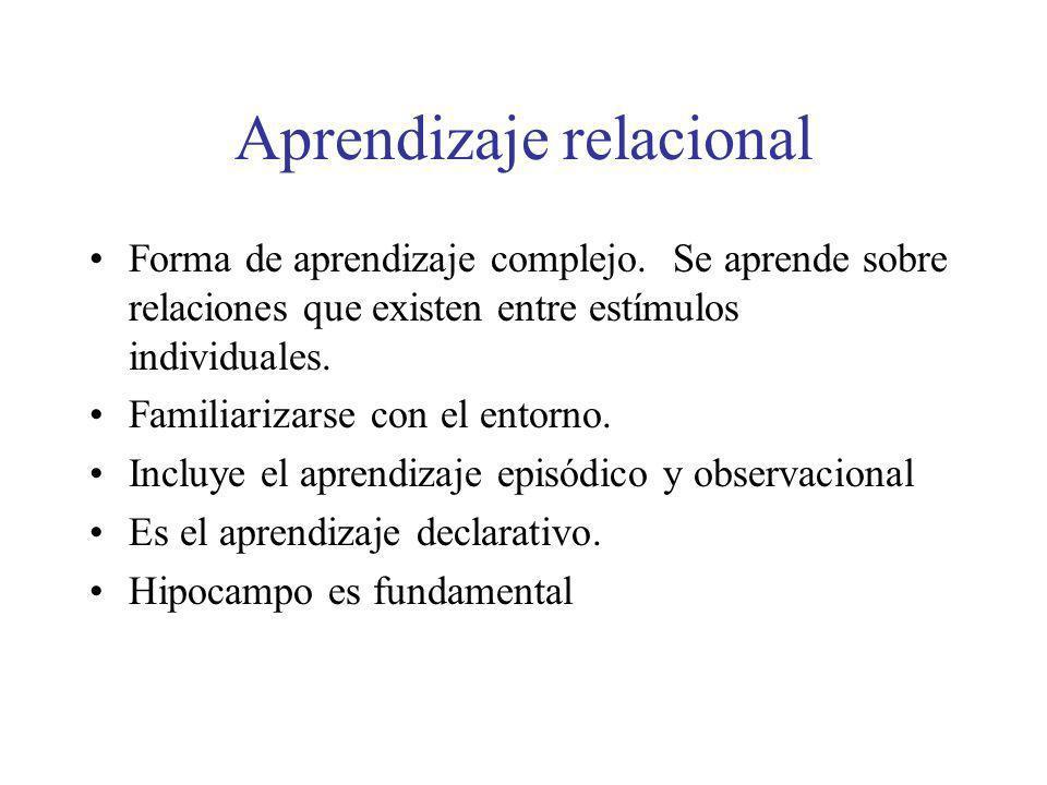 Aprendizaje relacional Forma de aprendizaje complejo. Se aprende sobre relaciones que existen entre estímulos individuales. Familiarizarse con el ento
