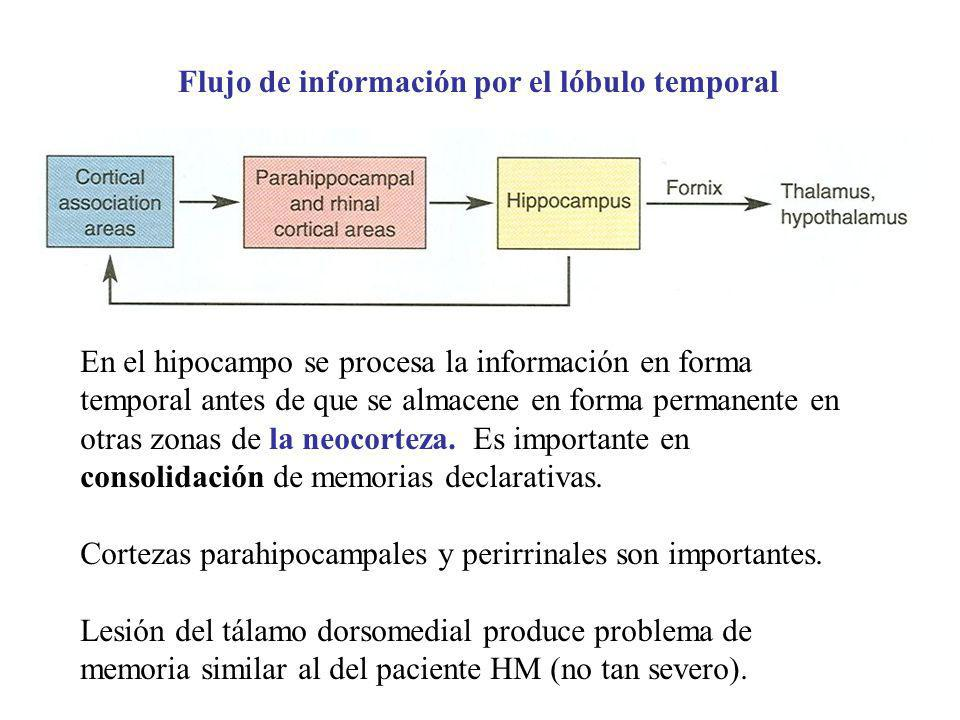 Flujo de información por el lóbulo temporal En el hipocampo se procesa la información en forma temporal antes de que se almacene en forma permanente e
