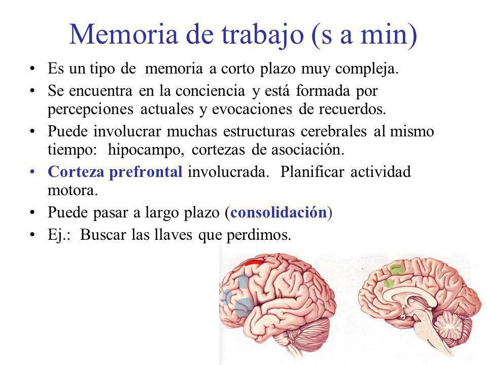 Memoria de trabajo (s a min) Es un tipo de memoria a corto plazo muy compleja. Se encuentra en la conciencia y está formada por percepciones actuales