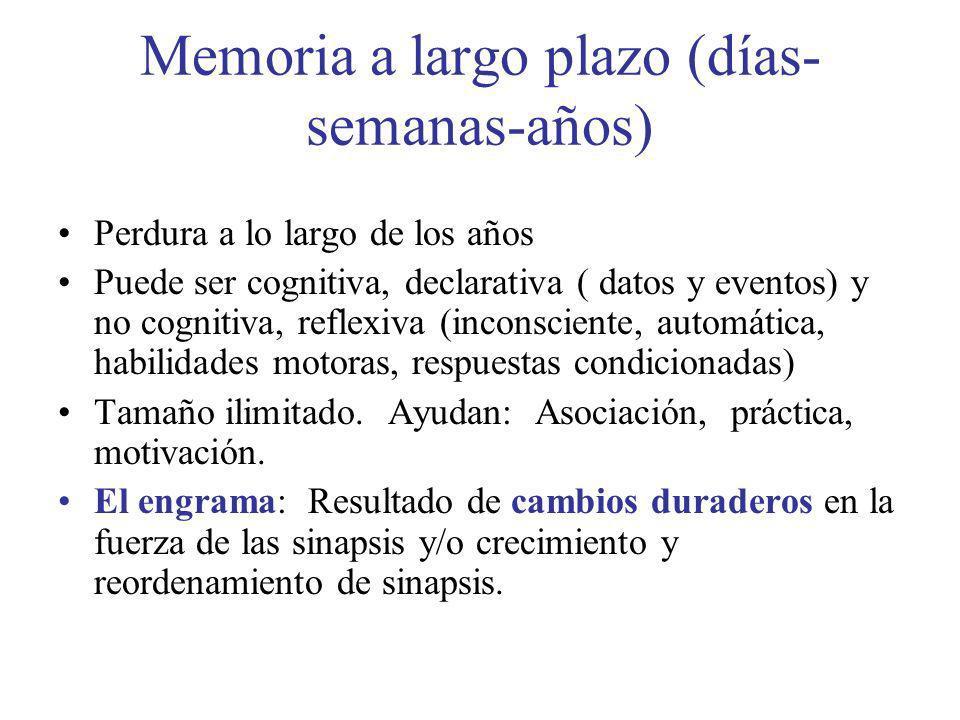 Memoria a largo plazo (días- semanas-años) Perdura a lo largo de los años Puede ser cognitiva, declarativa ( datos y eventos) y no cognitiva, reflexiv