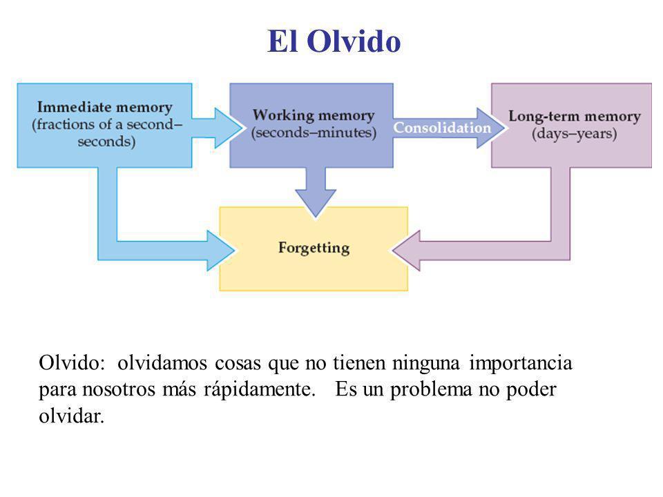 Olvido: olvidamos cosas que no tienen ninguna importancia para nosotros más rápidamente. Es un problema no poder olvidar. El Olvido