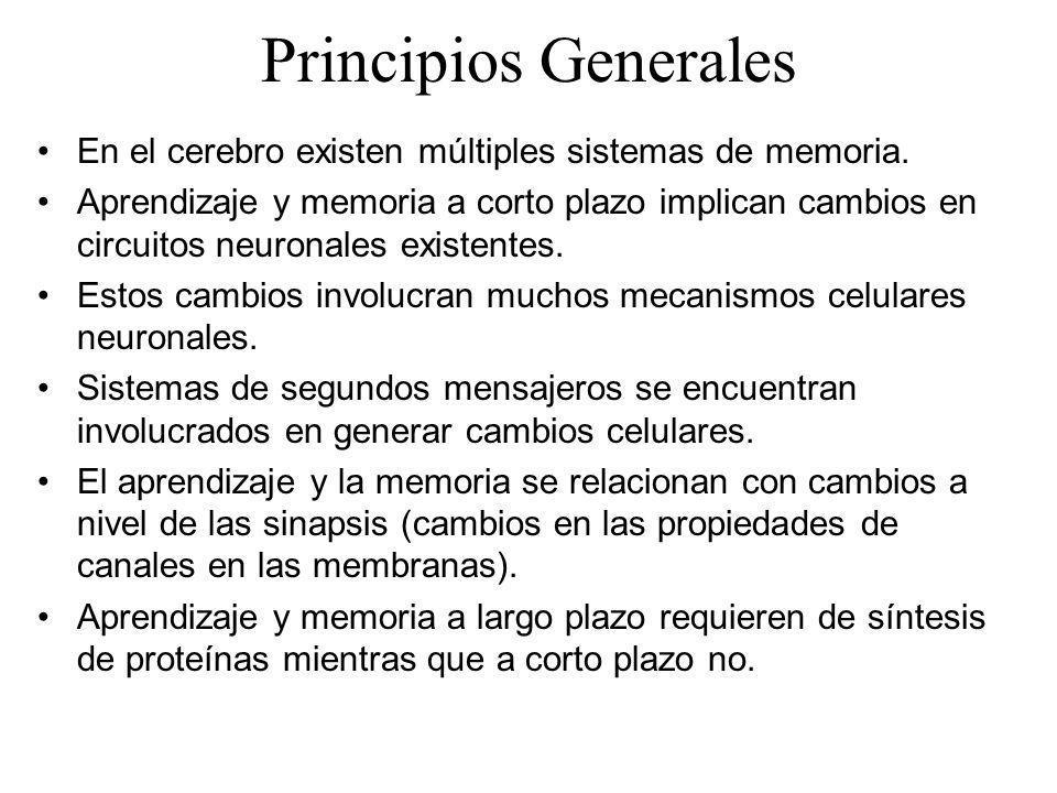 Principios Generales En el cerebro existen múltiples sistemas de memoria. Aprendizaje y memoria a corto plazo implican cambios en circuitos neuronales