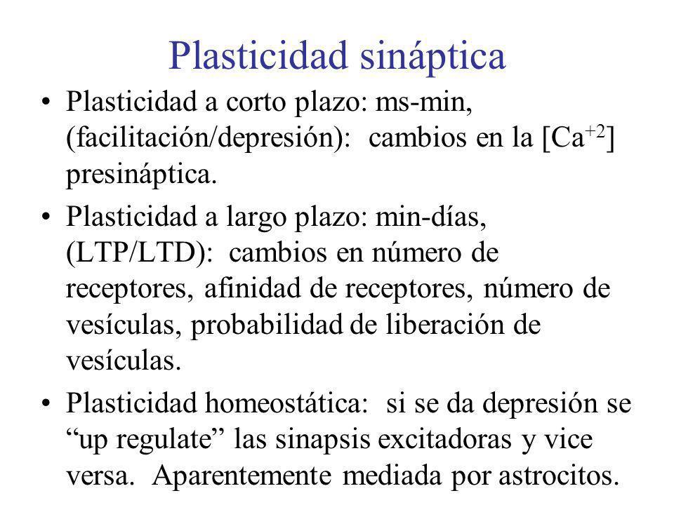 Plasticidad sináptica Plasticidad a corto plazo: ms-min, (facilitación/depresión): cambios en la [Ca +2 ] presináptica. Plasticidad a largo plazo: min