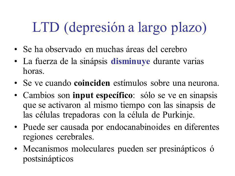 LTD (depresión a largo plazo) Se ha observado en muchas áreas del cerebro La fuerza de la sinápsis disminuye durante varias horas. Se ve cuando coinci